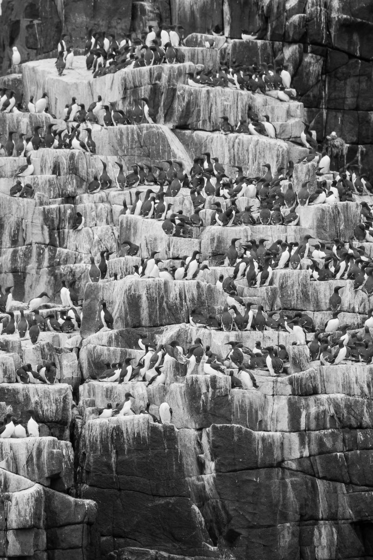 Sea birds huddled in cliff face
